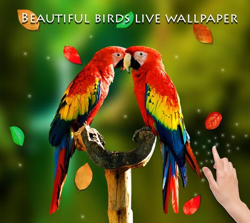 Download Birds 3D Live Wallpaper For PC