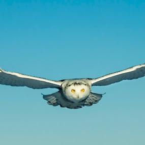 by Jocelyn Rastel-Lafond - Animals Birds (  )
