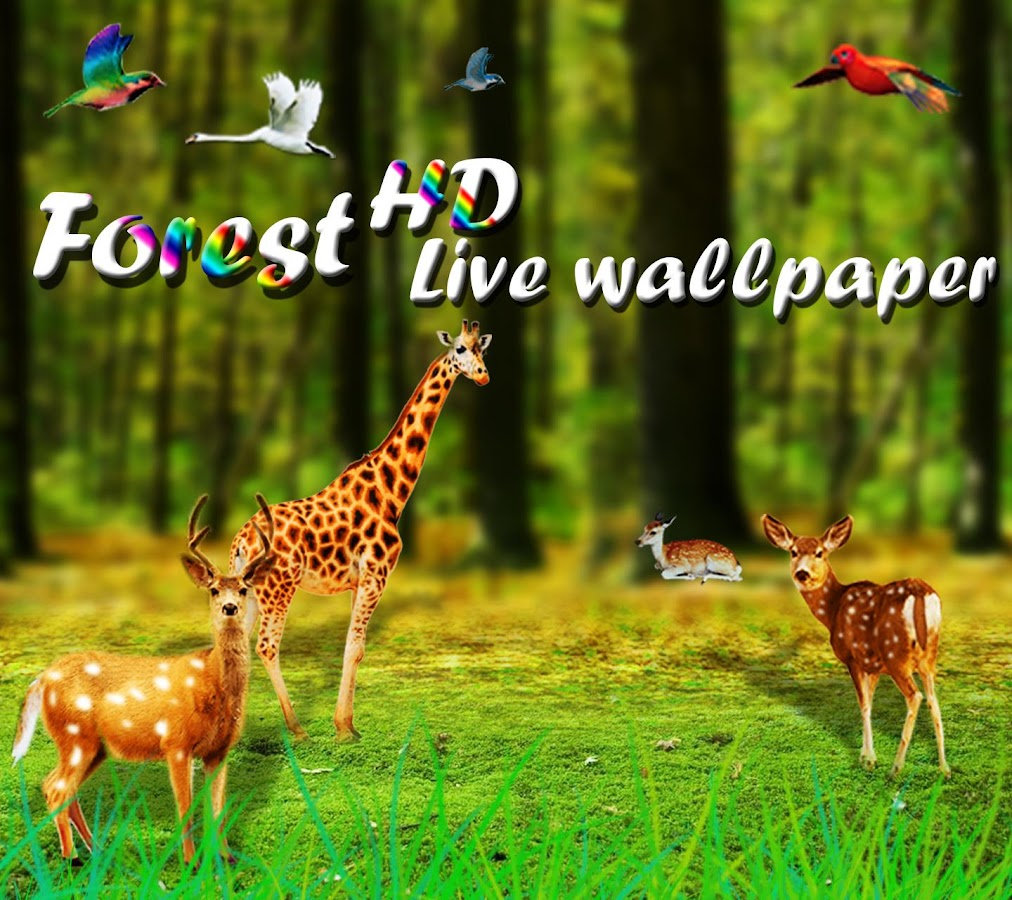 Forest HD Live Wallpaper  screenshotForest HD Live Wallpaper   Android Apps on Google Play. Forest Hd Live Wallpaper Free Apk. Home Design Ideas
