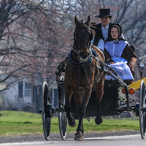 Buggy Ride by Sharon Horn - People Street & Candids ( amish, buggy, horse, wagon, couple, people )