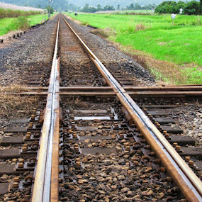 Mainline vs Cane Train by Ned Kelly - Transportation Railway Tracks ( rails, railroad, cane, standard gauge, train, narrow gauge )