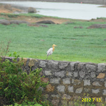 Birds of the Deccan Plateau