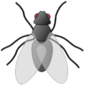 Notification Bugs Pro