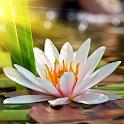 Auszeit - Wellness neu erleben