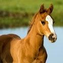 Pony Puzzle icon