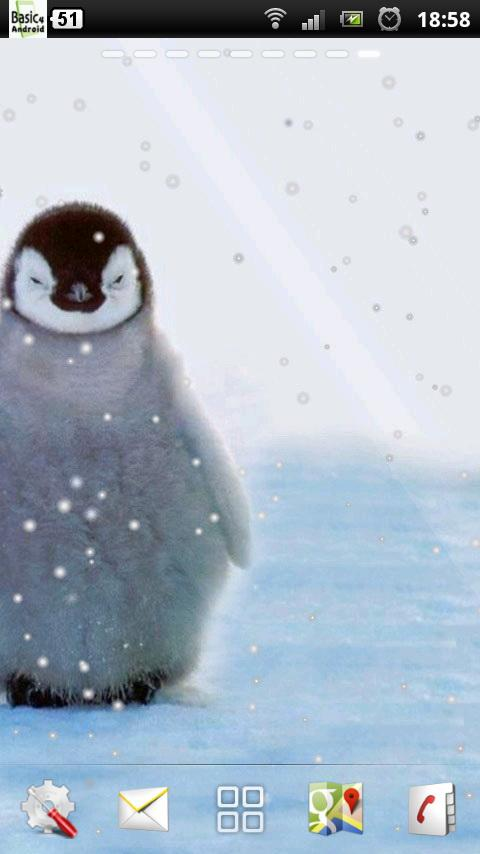 how to get a pet penguin
