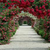 สวน ดอกไม้สดวอลเปเปอร์