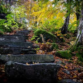 Gamlehaugen park, Bergen, Norway by Paulius Bruzdeilynas - Landscapes Forests (  )