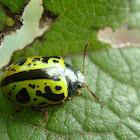 Escarabajo caligráfico