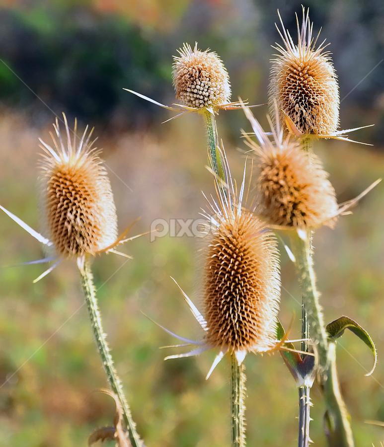 by Igor Vasiljevic - Nature Up Close Other plants