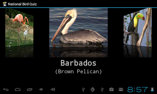 National Bird Quiz- screenshot thumbnail