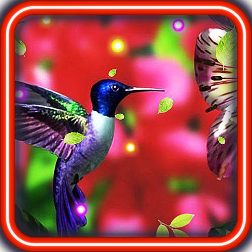 Lovely Colibri live wallpaper LOGO-APP點子