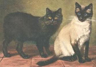 Classic Siamese cats - Thai cats - Traditional Siamese cats - Siamese cat history
