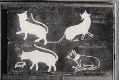 Cat Book Poems - Traditional Siamese cat