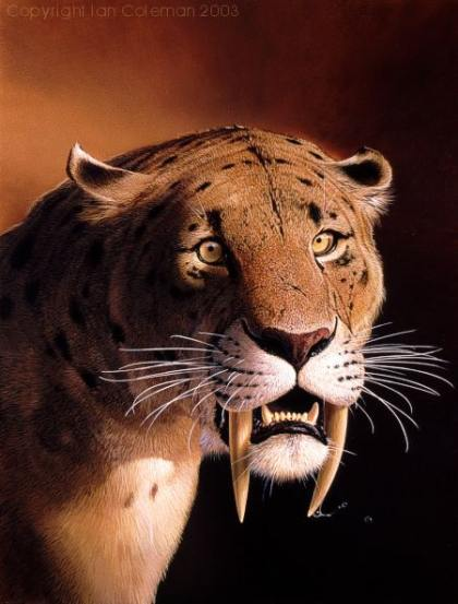Saber Tooth tiger