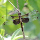 Widow Skimmer    female/immature