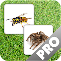 Insect Memory Game PRO icon