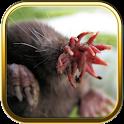 Free Weird Animals Puzzle Game