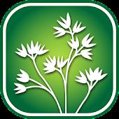 2950 N. California Wildflowers