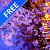 Evening Sakura at a Kyoto Pond file APK Free for PC, smart TV Download