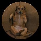 粘糊糊的小狗 icon