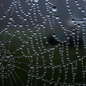 Wet cobweb by Zeljko Jelavic - Novices Only Macro