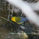 Prothontary Warbler