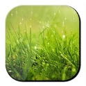Xperia Rain Drops Wallpaper icon