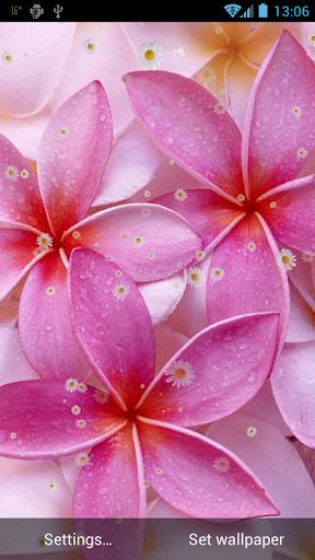 玩免費個人化APP|下載春天的花朵動態壁紙 app不用錢|硬是要APP