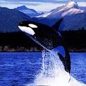 3D BIG Whale logo