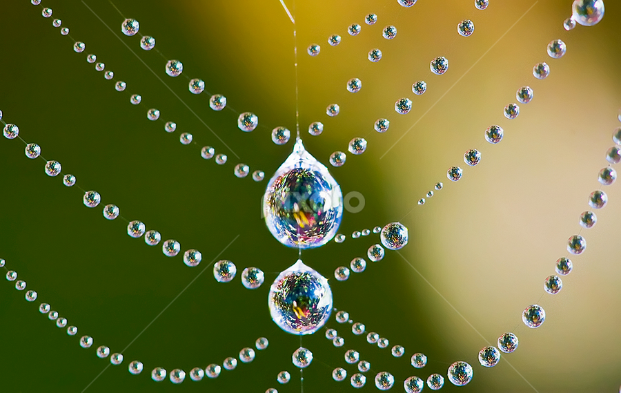 by Carl Sieswono Purwanto - Nature Up Close Webs ( renewal, green, trees, forests, nature, natural, scenic, relaxing, meditation, the mood factory, mood, emotions, jade, revive, inspirational, earthly,  )