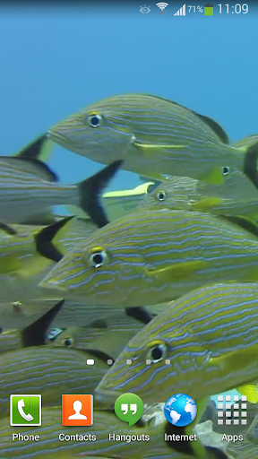 Tropical Fish Underwater Live2
