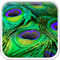 Peacock Feather Live Wallpaper icon
