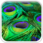 Peacock Feathers Live Wallpaper icon