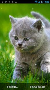 Kočka živé tapety - náhled