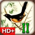 Audubon's Birds of America V02