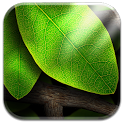 Tap Leaves Free Live Wallpaper icon
