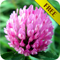 Biology - Plant Morphology icon