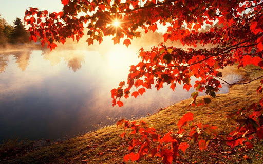 秋の壁紙のHD