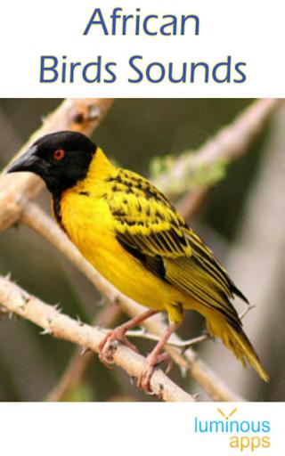 African Birds Sounds