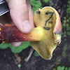 Two Colored Bolete Mushroom