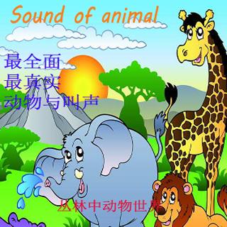 動物聲音大全