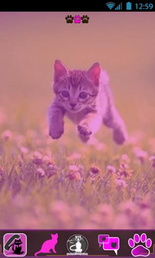 粉红色猫 F GO主题制作工具