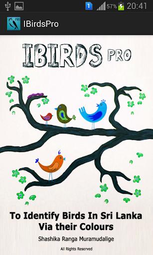 IBirds Pro