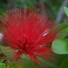 by Chandrakant Wankhede - Flowers Single Flower