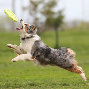 Athletic by Peter M  - Animals - Dogs Playing