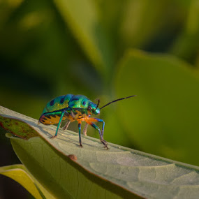 Let's Jiggy with it by Adit Lal - Animals Insects & Spiders ( colour, green, bug, leaf, small )