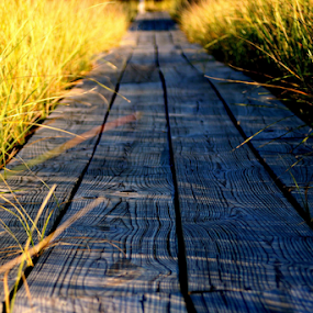 Walking to Heaven by Theodore Schlosser - Landscapes Beaches ( michigan, wood, path, beach grass, beach, nature, landscape )