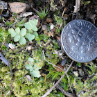 Tiny fern