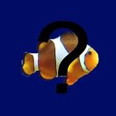 Reef Aquarium Fish Guide